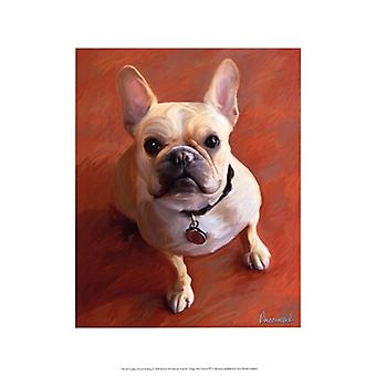 Sophie French Bulldog Poster Print by Robert McClintock (13 x 19)
