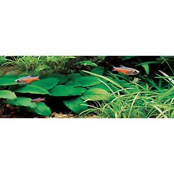 Aquarium Systems Plantpro tube T5 54W (Fish , Lighting , UV-lamps: T5)