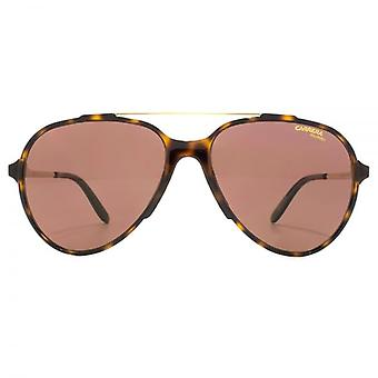 Carrera Maverick Aviator Sunglasses In Havana Gold Polarised
