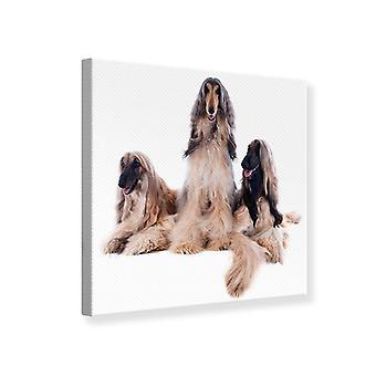Canvas Print, Who's The Fairest Of Them All