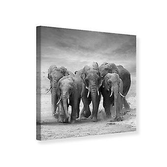 Canvas Print The Elephants
