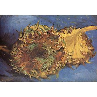 Два Cut подсолнухи, Винсент Ван Гог, 43 (2) x61cm