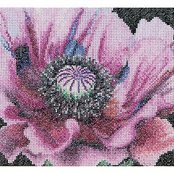 Poppy On Aida Counted Cross Stitch Kit-6