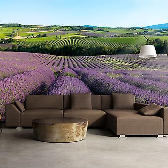 Tapete - Lavendelfelder