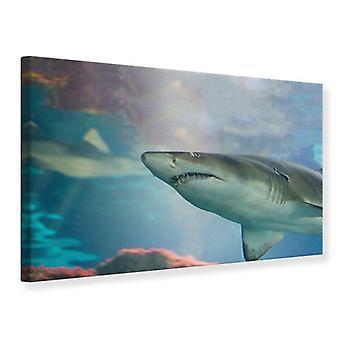 Canvas Print Shark