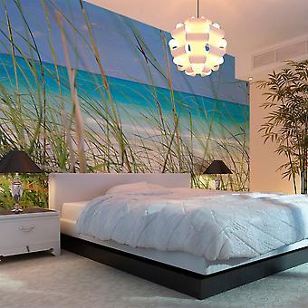 Wallpaper - Tropical journey