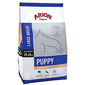 Arion Original Puppy Large Salmon & Rice (Dogs , Dog Food , Dry Food)