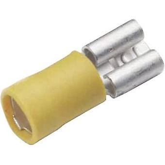Blade receptacle Connector width: 6.3 mm Connector thickness: 0.8 mm 180 ° Partially insulated Yellow Cimco 180234 1 pc