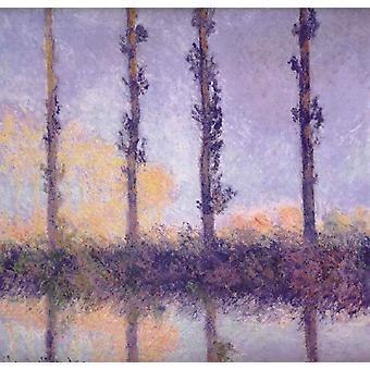 Alberi fFour, Claude Monet, 81,9 x 81,6 cm