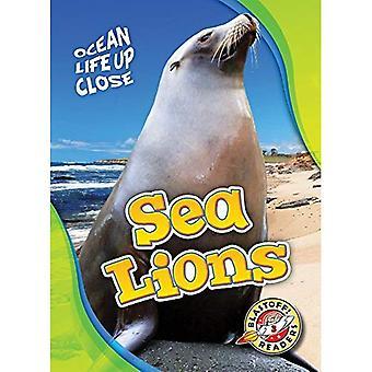 Sea Lions (Ocean Life Up Close)