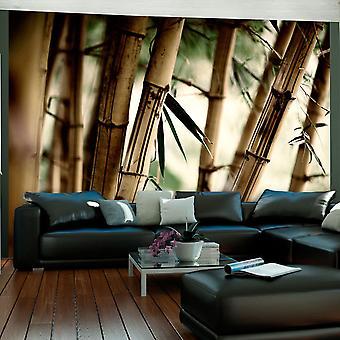 Behang - mist en bamboe bos