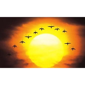 Silhouetted Birds in Sunset Poster Print by Panoramic Images (36 x 22)