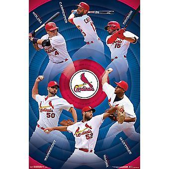 St Louis Cardinals - Team Poster Print