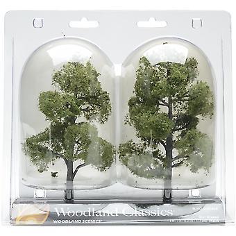 Sun Kissed Deciduous Trees 6