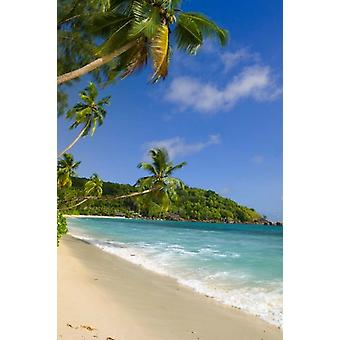 Beach at Chez Batistas Restaurant Seychelles Poster Print by Alison Wright