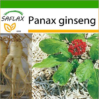 Saflax - 10 graines - sol - chinoise Ginseng - Ginseng - Ginseng - Ginseng - Ginseng