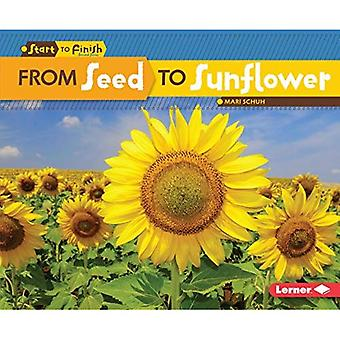 From Seed to Sunflower (Start to Finish, Second)