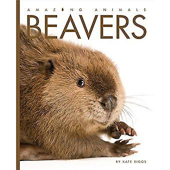 Amazing Animals: Beavers