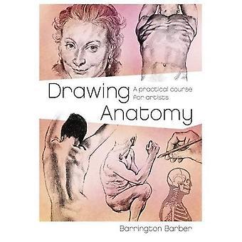 Zeichnung Anatomie