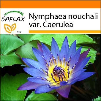 Saflax - Garden in the Bag - 15 seeds - Blue Lotus - Lotus bleu - Loto blu dell'India - Loto azul - Blaue Seerose