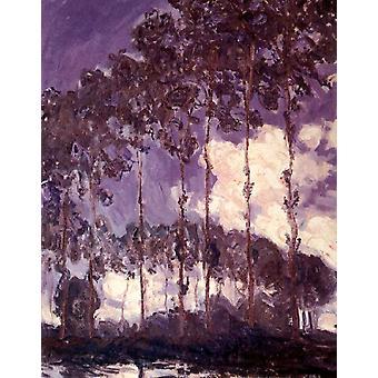 أشجار الحور على ضفاف نهر التخصص، كلود مونيه، 50x40cm