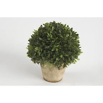 Amadeus Potted Boxwood Ball H19 D15 (Home , Decoration , Flowers)