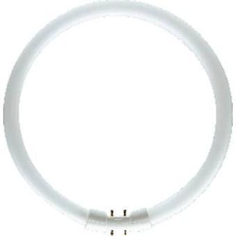 Fluorescent tube 2GX13 40 W Warm white 830 Ring shape (Ø x L) 16 mm x 305 mm EEC: A+ (A++ - E) 1 pc(s)