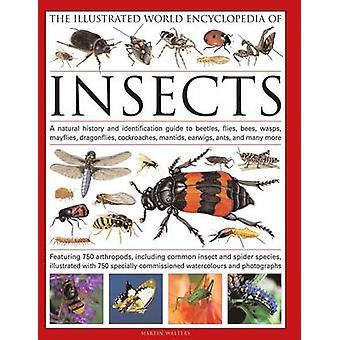 De wereld van de Geïllustreerde Encyclopedie van insecten - A Natural History en