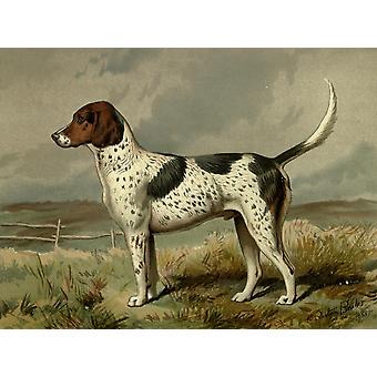 Ilustra el libro de la impresión de póster de 1881 Fox-hound perro barbero CB