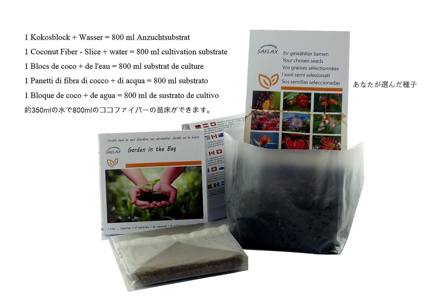 Saflax - Garden in the Bag - 800 seeds - Organic - Caraway - BIO - Carvi - BIO - Cumino - Ecológico - Comino - Kümmel