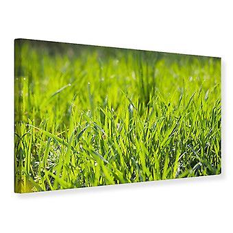 Leinwand drucken helle Grass im Morgentau
