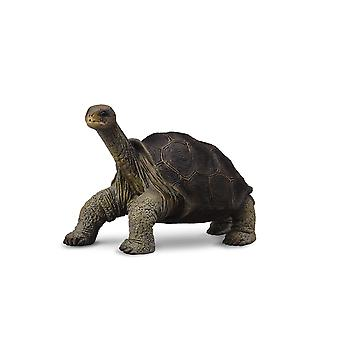 CollectA Pinta Island Tortoise (In memory of Lonesome George)
