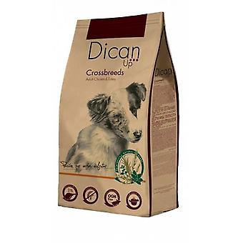Dican Up Cross Breeds for Dogs  (Dogs , Dog Food , Dry Food)