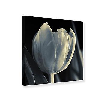 Lærred Print XXL Tulip i sort/hvid