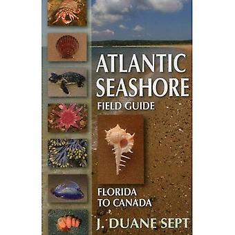 Atlantische kust Field Guide: Florida naar Canada