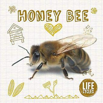 Honey Bee (Life Cycles)