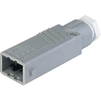 Mains connector Plug, straight Total number of pins: 5 + PE 6 A Grey Hirschmann STAS 5 1 pc(s)