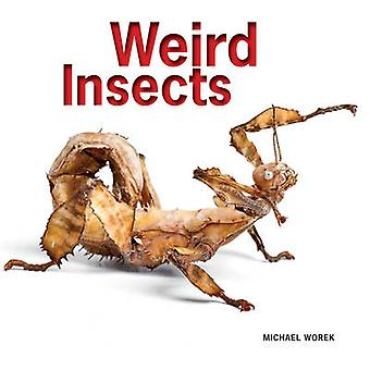 Weird Insects by Michael Worek - 9781770852341 Book