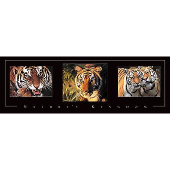 Tiger Tryp Poster Print by Frontline