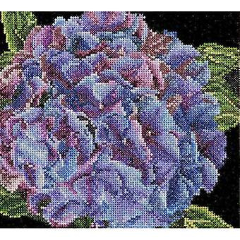 Hydrangea On Aida Counted Cross Stitch Kit-5.75