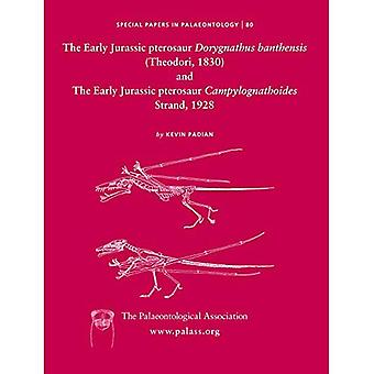 Early Jurassic Pterosaur Dorygnathus Banthensis (Theodori, 1830) and the Early Jurassic Pterosaur Campylognathoides Strand, 1928 (Special Papers in Palaeontology)