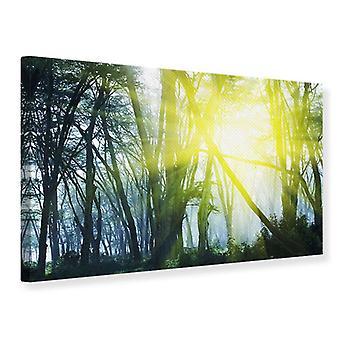 Lærred Print solstrålerne i skoven