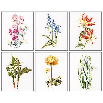 Floral Studies 6 On Aida Counted Cross Stitch Kit-6.75