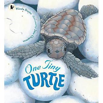 En liten sköldpadda av Nicola Davies - Jane Chapman - 9781406364637 bok