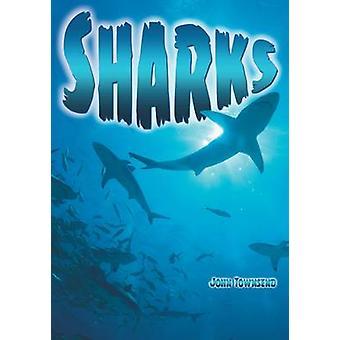 Sharks by John Townsend - 9781781475393 Book