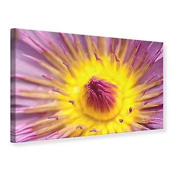Canvas Print XXL Lotus