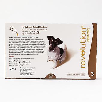 Revolusjon (brun) for små hunder på 5.1-10kg (10.1-20lbs), 3 Pack