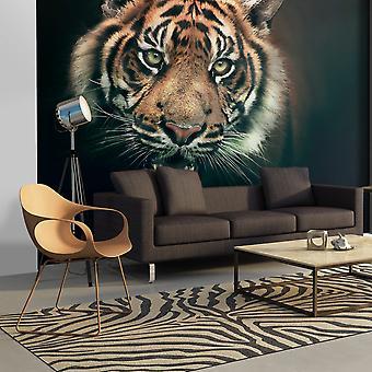 Tapete - Bengal-Tiger