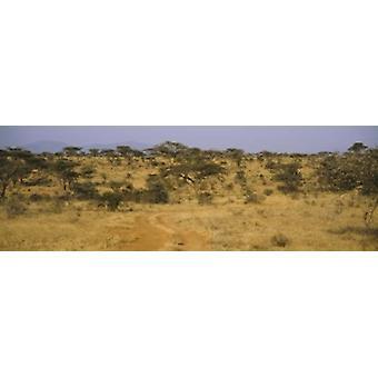 Alberi su un paesaggio Samburu National Reserve Kenya Poster Print