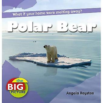 Isbjörn (stora bilden) (stora bilden)